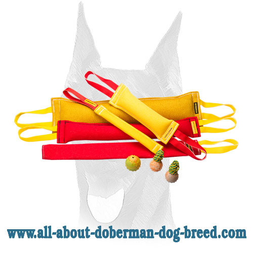 Ultimate Doberman Training Set With 3 Amazing Gifts Te65