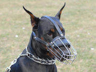 doberman dog muzzle