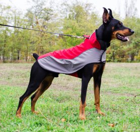 Doberman Pinscher Boarding Kennel